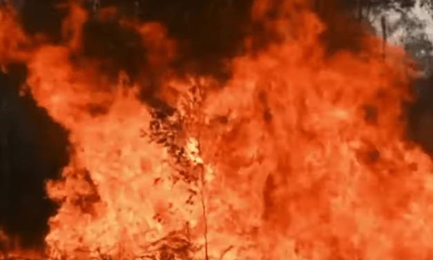 Rupert Murdoch's son James condemns Fox News over misleading Australia wildfires coverage