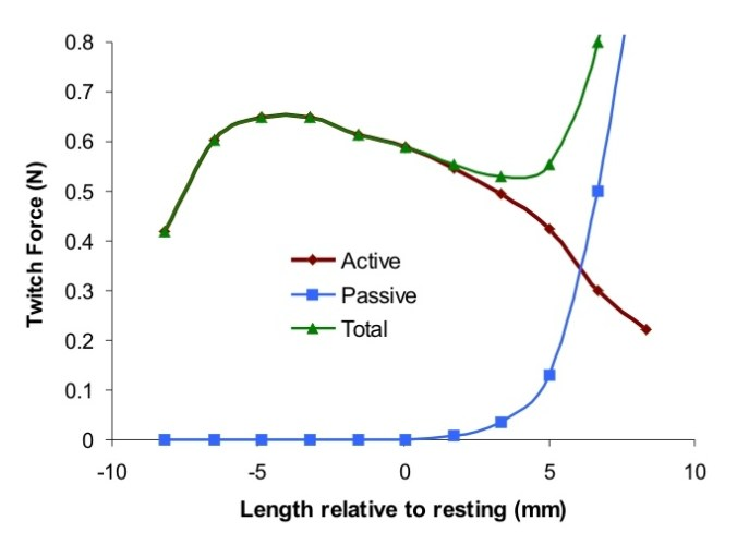 A graph of active, passive, and total tension in relation to muscle length