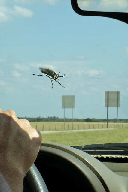 Bug On The Windshield