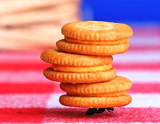 Hard-Work-Ant