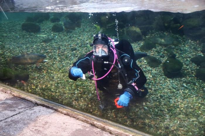 dykare i akvarium