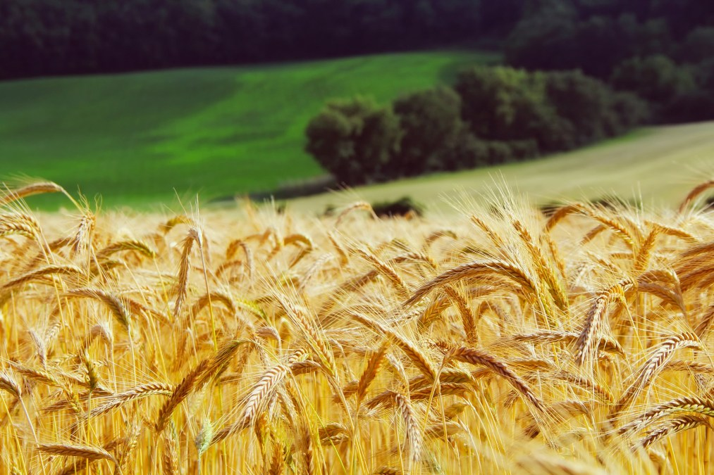 Wealth Preservation with Canadian Farmland