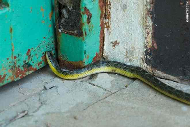 Snake in North Argentina (©photocoen)