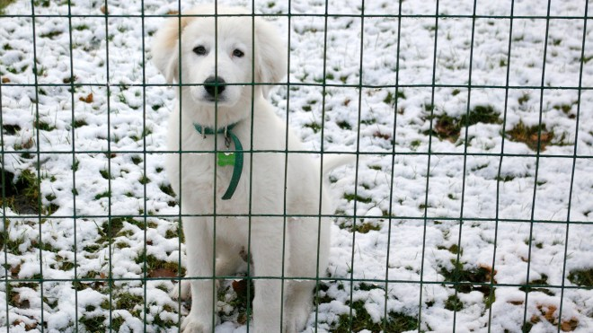 Theo in Snow