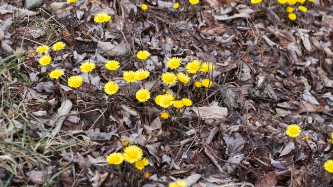 Yellow Flower on Side of Road in Leaf Litter
