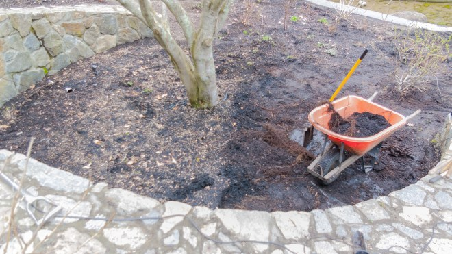 Removing Mulch Under the Red Maple - Tips for Getting Work Done