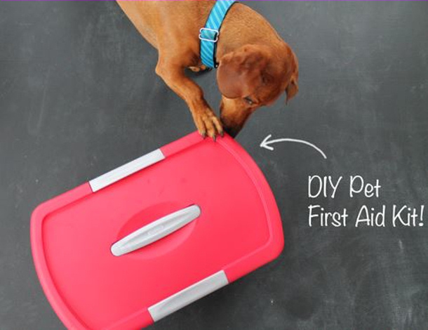 Ammo the Dauschound Pet First aid kit closed