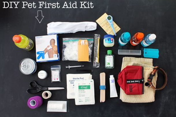 Ammo the Dauschound Pet First aid kit contents