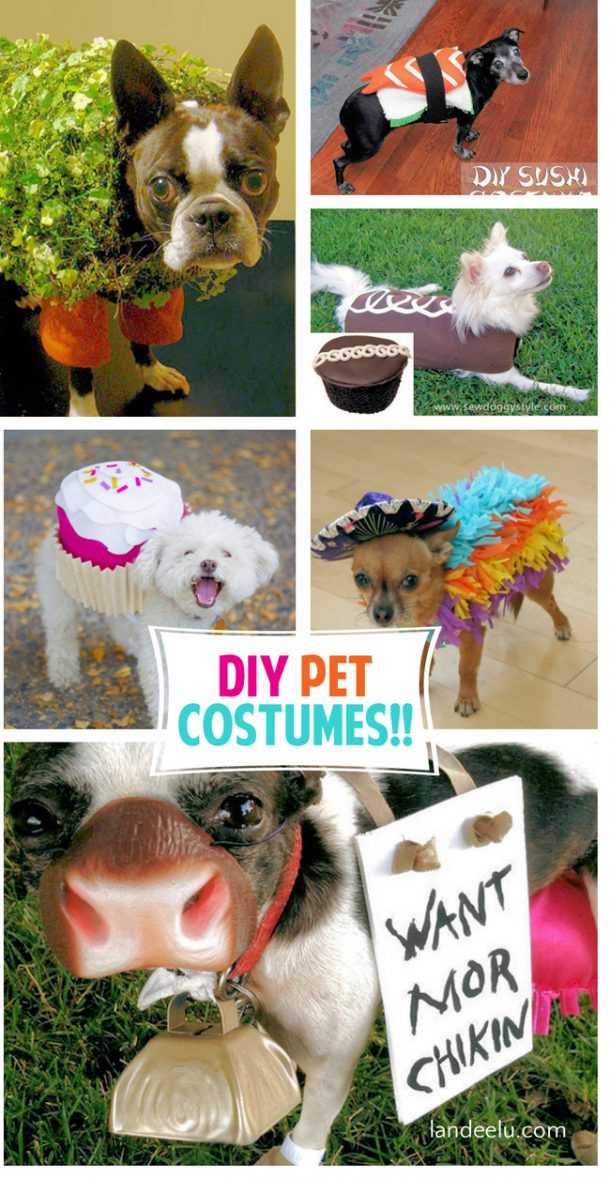 Adorable diy pet costumes landeelu rumor has it that diy pet costumes are one of the most popular things pinned on pinterest for some reason i find that hilarious and charming and like all solutioingenieria Image collections