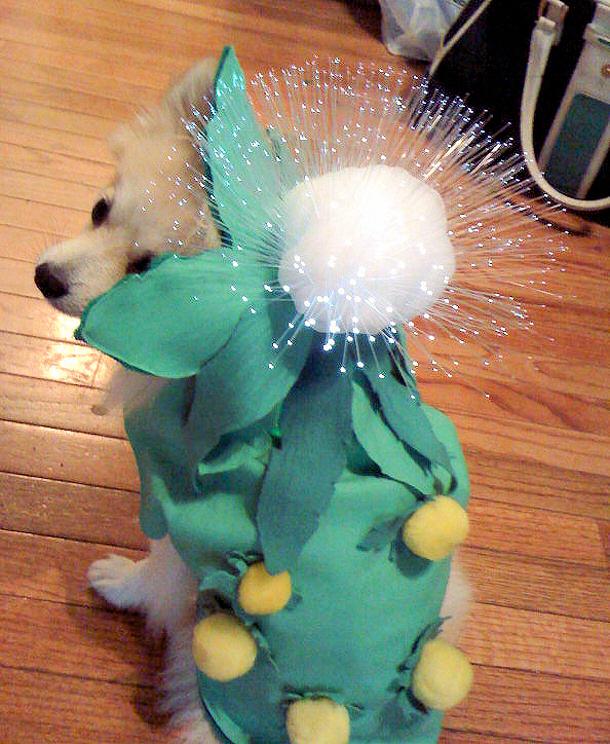 Light-Up-Dandelion-Doggy-Costume