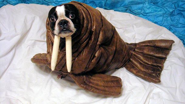Walrus-Pet-Halloween-Costume