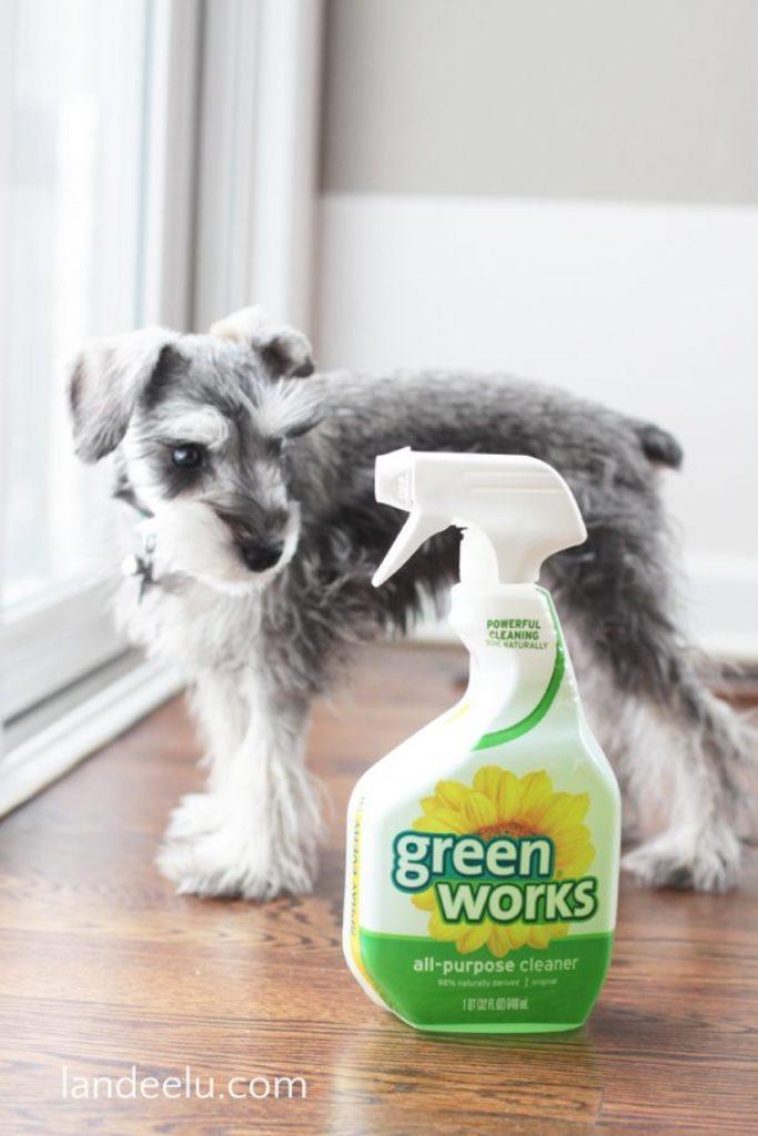 Greenworks Cleaner Lola