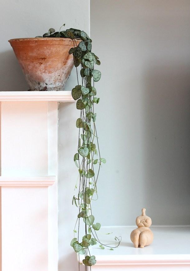 Best Indoor Plants To Bring Life To Your Home Landeelu Com