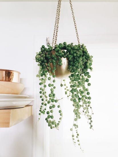 String of Pearls | The Brit+Co