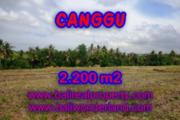 Exotic Property in Bali, Land for sale in Canggu Bali – TJCG128