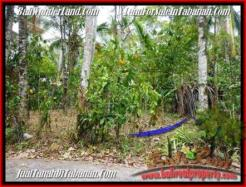 FOR SALE Affordable LAND IN Tabanan Selemadeg BALI TJTB161