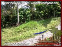 Affordable LAND SALE IN Tabanan Selemadeg BALI TJTB206