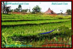 LAND SALE IN Canggu Brawa TJCG195
