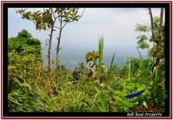 Exotic PROPERTY LAND SALE IN TABANAN TJTB225