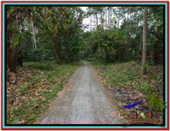 Magnificent LAND FOR SALE IN TABANAN TJTB212