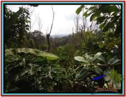 FOR SALE Beautiful 11.000 m2 LAND IN TABANAN BALI TJTB213