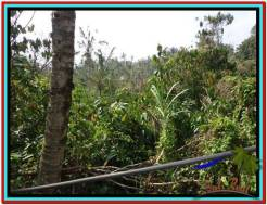 FOR SALE Beautiful 11.000 m2 LAND IN TABANAN BALI TJTB213