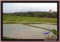 Exotic PROPERTY LAND SALE IN TABANAN TJTB248
