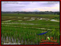 Exotic TABANAN BALI 2,400 m2 LAND FOR SALE TJTB263