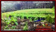 FOR SALE Beautiful LAND IN Tabanan Selemadeg BALI TJTB283