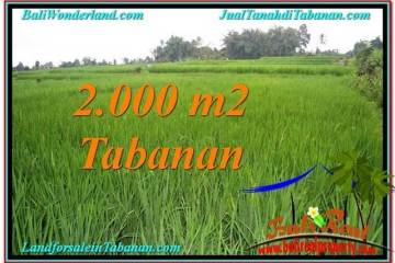 Beautiful PROPERTY Tabanan Penebel 2,000 m2 LAND FOR SALE TJTB303