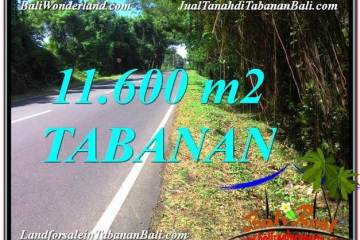 Exotic PROPERTY LAND SALE IN Tabanan Selemadeg TJTB327