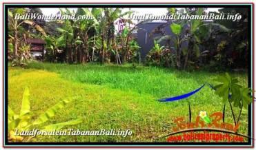 Badung BALI 5,000 m2 LAND FOR SALE TJTB332