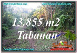 Beautiful PROPERTY LAND SALE IN TABANAN BALI TJTB335