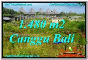 Affordable PROPERTY Canggu Pererenan BALI LAND FOR SALE TJCG212