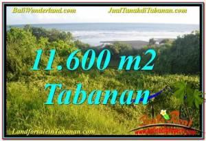 FOR SALE Exotic PROPERTY 11,600 m2 LAND IN Tabanan Selemadeg TJTB340