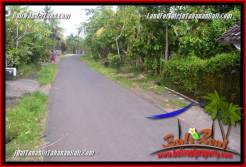 Magnificent 1,000 m2 LAND IN Tabanan Selemadeg Timur FOR SALE TJTB363