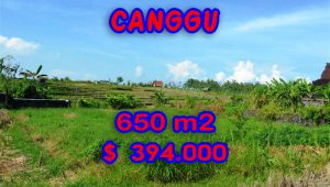 Magnificent Property for sale in Bali, land for sale in Canggu Bali  – TJCG106