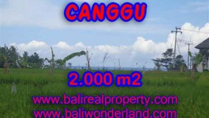 Stunning Property for sale in Bali land sale in Canggu Bali – TJCG140