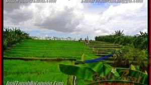290 m2 LAND IN Canggu Pererenan BALI FOR SALE TJCG141