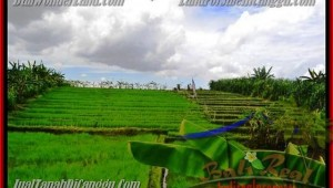 290 m2 LAND IN Canggu Pererenan BALI FOR SALE TJCG141