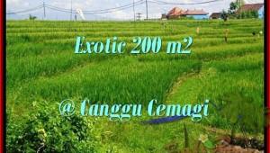 Beautiful PROPERTY 200 m2 LAND SALE IN CANGGU TJCG170