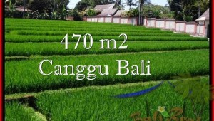 Magnificent PROPERTY LAND IN Canggu Pererenan BALI FOR SALE TJCG187