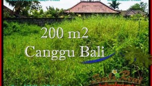 Beautiful 200 m2 LAND IN CANGGU FOR SALE TJCG190