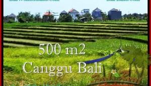Exotic PROPERTY 500 m2 LAND SALE IN CANGGU TJCG192