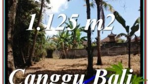 FOR SALE Affordable PROPERTY 1,125 m2 LAND IN CANGGU TJCG208