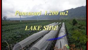 Magnificent PROPERTY 1.200 m2 LAND SALE IN TABANAN BALI TJTB178