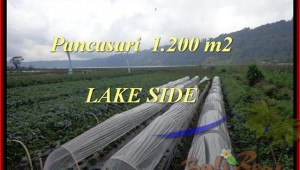 Magnificent PROPERTY 1.200 m2 LAND SALE IN TABANAN BALI TJTB178