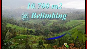 FOR SALE Magnificent LAND IN Tabanan Selemadeg BALI TJTB219