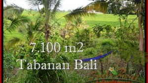 Affordable Tabanan Selemadeg BALI LAND FOR SALE TJTB240