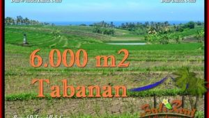 Magnificent PROPERTY 6,000 m2 LAND FOR SALE IN Tabanan Selemadeg TJTB268